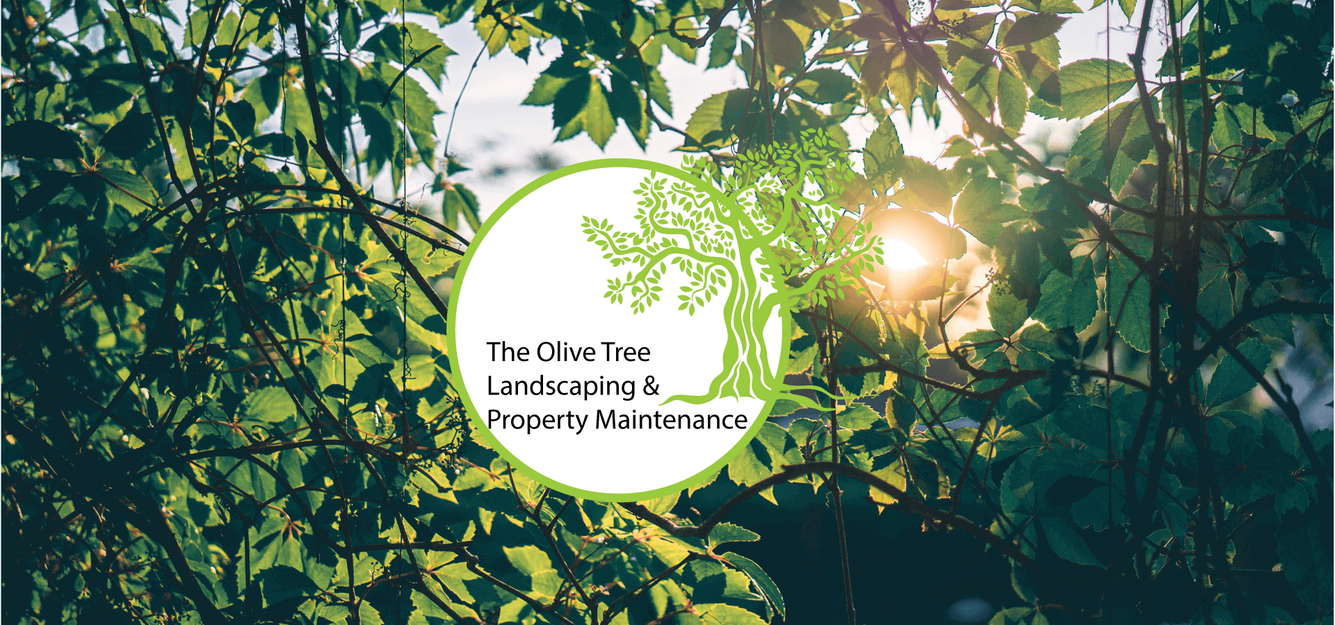 The Olive Tree Landscaping & Property Management